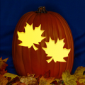 Maple Leaves CO