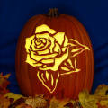 Rose CO
