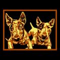 Mini Bull Terrier 02