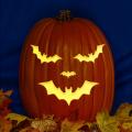 Bat Jack CO