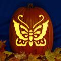 Butterfly 01 CO