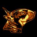 Mini Bull Terrier 07