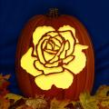 Rose 02 CO