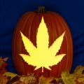 Marijuana Leaf CO