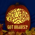 Got Brains CO
