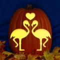 Flamingo Love CO