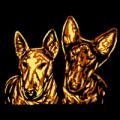 Mini Bull Terrier 03