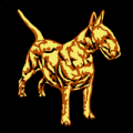 Mini Bull Terrier 04